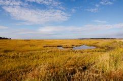 秋天的沼泽 免版税库存图片