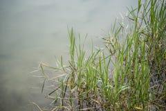 秋天的湖植物 免版税库存照片