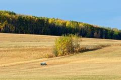 秋天的牧场地 免版税库存图片