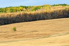秋天的牧场地 免版税图库摄影