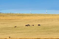 秋天的牧场地 免版税库存照片