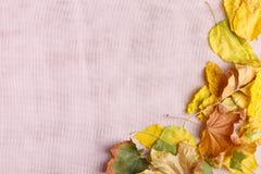 秋天的秋天概念下落的叶子在桌布的 免版税图库摄影