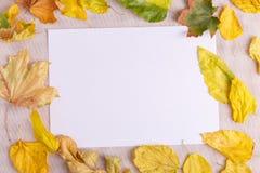 秋天的秋天概念下落的叶子在桌布的 库存照片