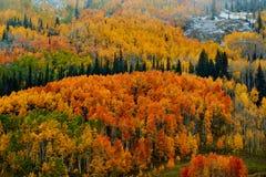 秋天的科罗拉多 库存照片