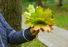 秋天的符号 免版税库存照片