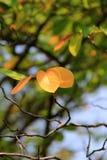 秋天的第一种颜色 免版税图库摄影