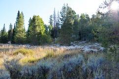 秋天的美丽的山草甸 免版税库存图片