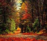 秋天的美好的颜色 免版税库存照片