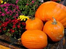 秋天的肯定的标志-南瓜和花 免版税库存图片