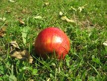 秋天的苹果园 免版税图库摄影