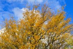 秋天的落叶林 图库摄影