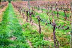 秋天的葡萄园 免版税库存图片
