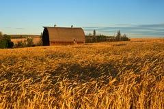 秋天的被放弃的谷仓 库存照片