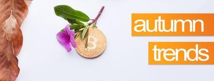 秋天的设计元素 秋天的盖子图象 Bitcoin和桃红色花与秋天在角落离开 图库摄影
