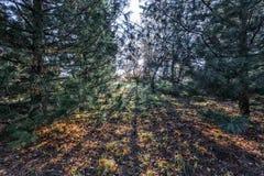 秋天的长的阴影 免版税库存图片