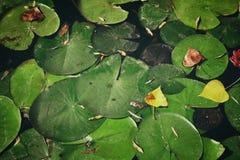 秋天的顶视图图象在池塘生叶 免版税库存照片