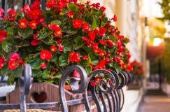 秋天的颜色在城市 在窗台的风景花盆 库存图片