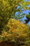 秋天的颜色在森林里 免版税图库摄影