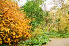 秋天的颜色,秋天金黄叶子  图库摄影