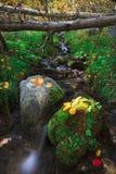 秋天的颜色 希望谷加利福尼亚 免版税库存照片
