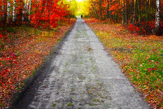 秋天的颜色 免版税库存照片