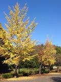 秋天的颜色 库存照片