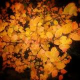 秋天的颜色 免版税库存图片