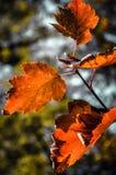 秋天的颜色 免版税图库摄影