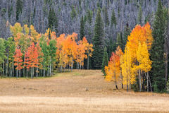 秋天的风景山草甸 免版税库存图片