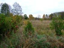 秋天的21森林 库存照片