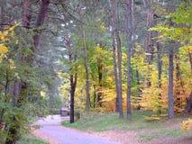 秋天的22森林 免版税库存图片
