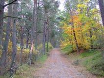 秋天的23森林 免版税库存图片