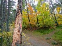 秋天的24森林 库存照片
