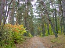 秋天的25森林 库存照片