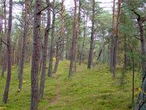 秋天的54森林 图库摄影