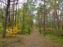 秋天的57森林 库存照片