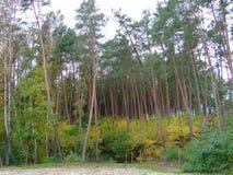 秋天的59森林 库存照片