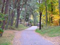 秋天的26森林 库存照片