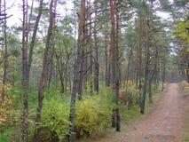 秋天的27森林 库存照片