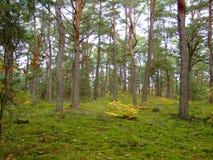 秋天的28森林 库存照片