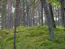 秋天的29森林 免版税库存照片