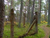 秋天的30森林 免版税图库摄影
