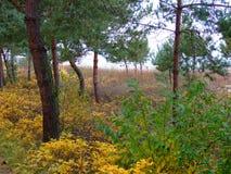 秋天的32森林 免版税图库摄影
