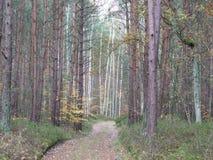 秋天的121森林 图库摄影