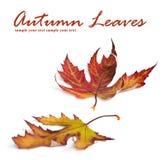 秋天看板卡色的叶子 免版税库存图片