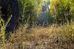 秋天神仙的森林颜色 免版税库存图片
