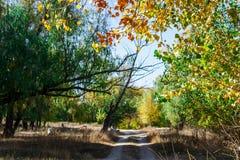 秋天神仙的森林颜色 库存图片