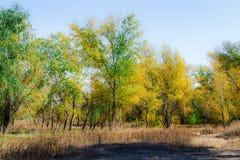 秋天神仙的森林颜色 免版税库存照片