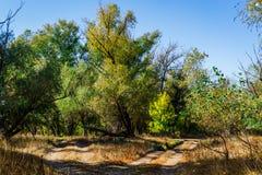 秋天神仙的森林颜色 免版税图库摄影