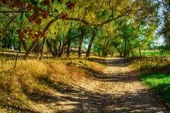 秋天神仙的森林颜色 库存照片
